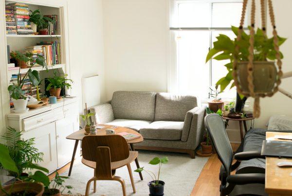 plantes dans appartement