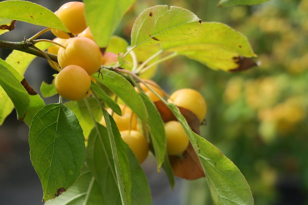 Les fruits en hiver Edith Vigné Arte Diem Morlaix